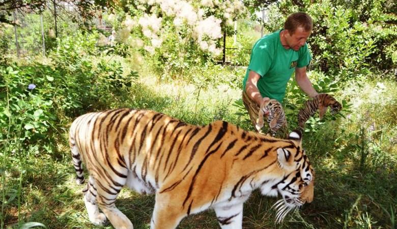 В Крыму родились дальневосточный леопард и амурские тигры