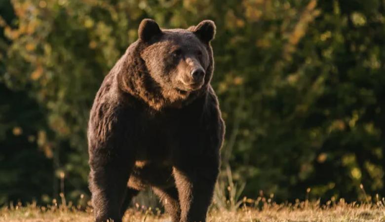 Принца Лихтенштейна обвинили в убийстве самого большого медведя в Европе