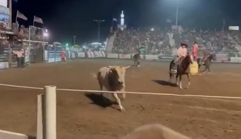 В США бык во время родео решил запрыгнуть на трибуну