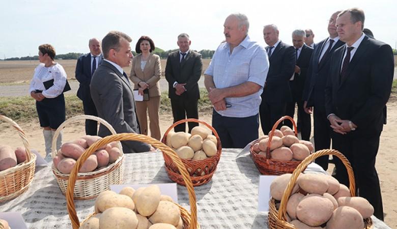 Лукашенко готов помочь Зеленскому поставками картофеля