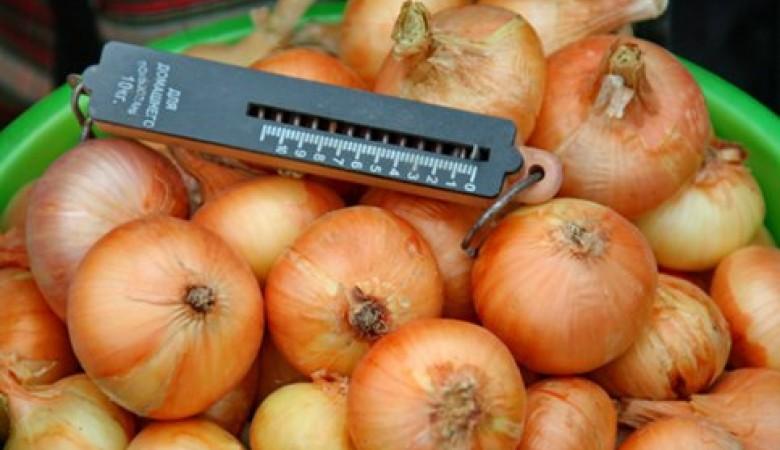 Правительство РФ сняло запрет на поставку лука и капусты из Турции