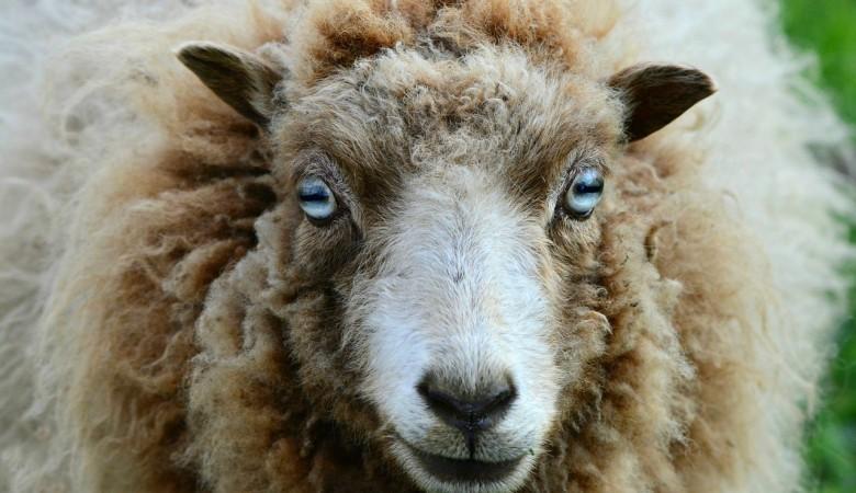 В Крым поступит партия вакцины от коронавируса для животных