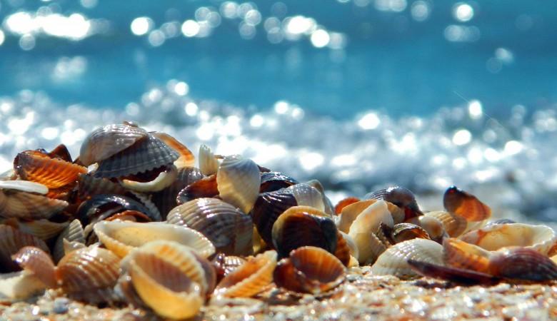 Купание на десяти пляжах Крымского полуострова запретил Роспотребнадзор